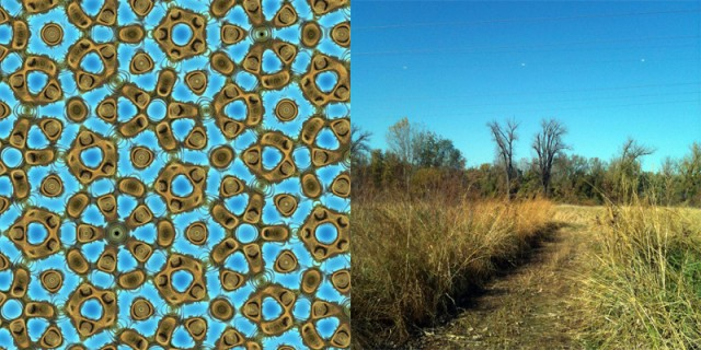 Farris has figured out ways to meld the colors and forms of a nature photograph with the wave functions that go into his wallpaper designs, thereby creating a dazzling range of wallpaper frauds, such as this one derived from the adjacent meadow view. Some of the tree branches are still visible in the fake wallpaper. (Illustration and Photo: Frank Farris)