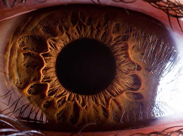 The human eye evolved gradually, with natural selection favoring intermediate forms, but studies indicate that complexity may also emerge by other means.