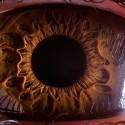 Manvelyan_eye-web