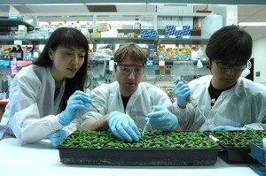 Hailing Jin, Arne Weiberg, and Ming Wang at the University of California, Riverside, revealed that a fungus silences plant immunity genes by hijacking the plants' RNA defense system.