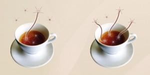 Coffee entanglement.