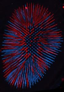 Fruit fly eye cells.