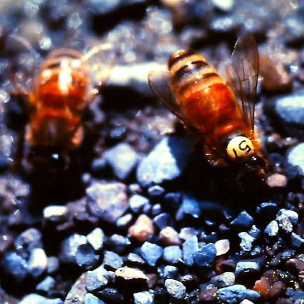 social-bees-thumb