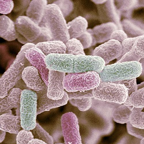 e_coli_thumb
