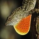 Lizards_Thumb