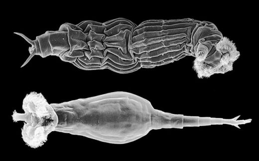 Microscopic creatures called bdelloid rotifers have thrived without mating for millions of years. How they did it could reveal why sex is so essential for almost everyone else.