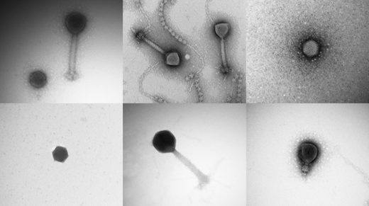In the few decades since viruses were first found in the oceans, scientists have only been able to identify a handful of species. A new survey has uncovered nearly all the rest.
