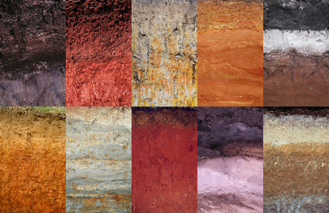 Types of soil in the U.S. include (clockwise from top left) the Honga, Madison, Coxville, Cowarts, Lynn Haven, Green Level, Leon, Hiwassee, Tuxekan, and Appling series. All are found in the Southeast except for the Tuxekan series, which is located in Alaska.