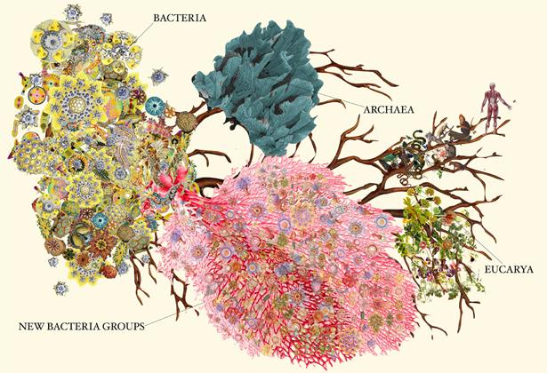 newfound bacteria expand tree of life quanta magazine