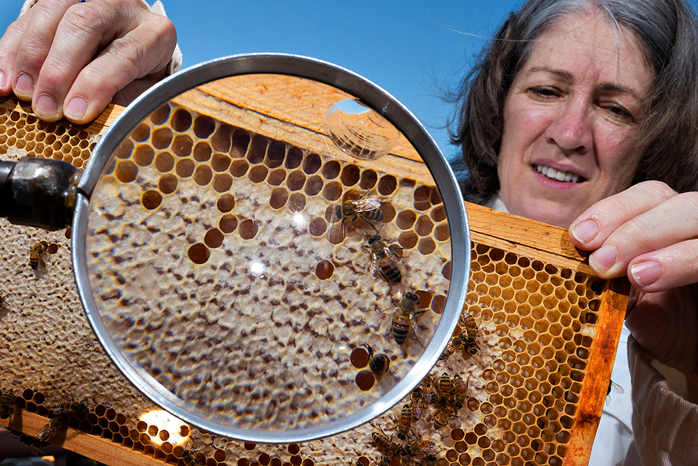 Nancy Moran inspects a few of the bees in her rooftop hive at the University of Texas, Austin.