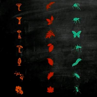 species_ft