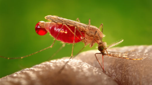 <p>By examining regions shared between some of nature's most variable genes, malaria researchers are piecing together an understanding of a deadly parasite.</p>