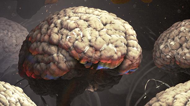 How Humans Evolved Supersize Brains Quanta Magazine