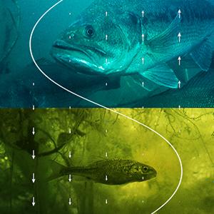 Fish_Ft