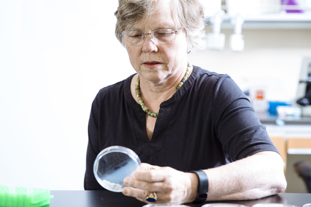 Joan Strassmann, a biologist at Washington University in St. Louis, studies cooperation and social behavior in wasps and amoebas.