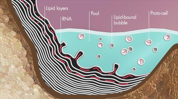Димер предполагает, что биологические молекулы эволюционировали в гидротермальных бассейнов. Слои липидов бы построить вверх по краям бассейна, улавливания веществ и стимулирует рост РНК (красные линии). Липид-привязан тогда капельки будут шелушиться из этих слоев, создание РНК-заполненный прото-клеток.