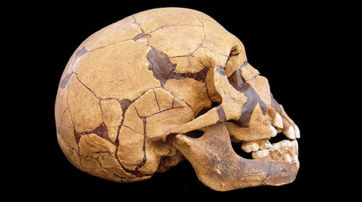 How interbreeding among early hominins harmed humans but may have slowed the Neanderthals' decline.