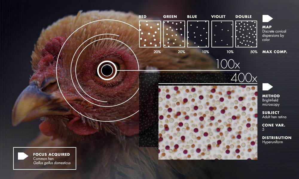 Hyperuniformity Found in Birds, Math and Physics | Quanta Magazine