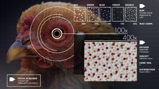 random matrix theory | Quanta Magazine