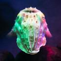 Cuttlefish_Ft