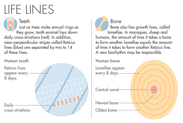 Graphic: Life Lines