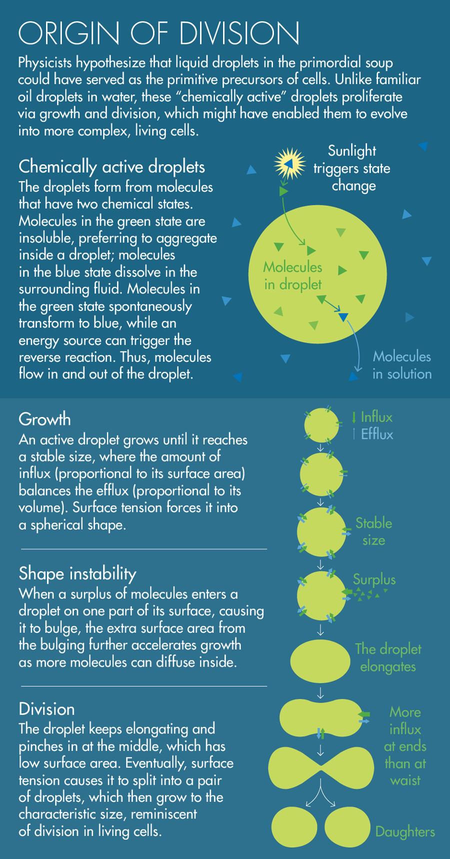 Dividing Droplets Could Explain Origin of Life | Quanta Magazine