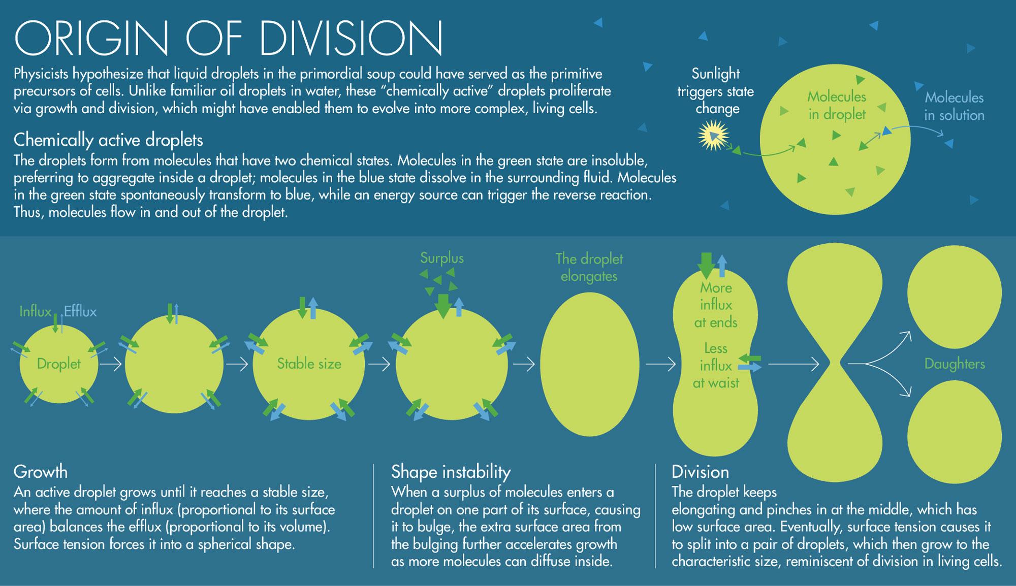 Dividing Droplets Could Explain Life's Origin