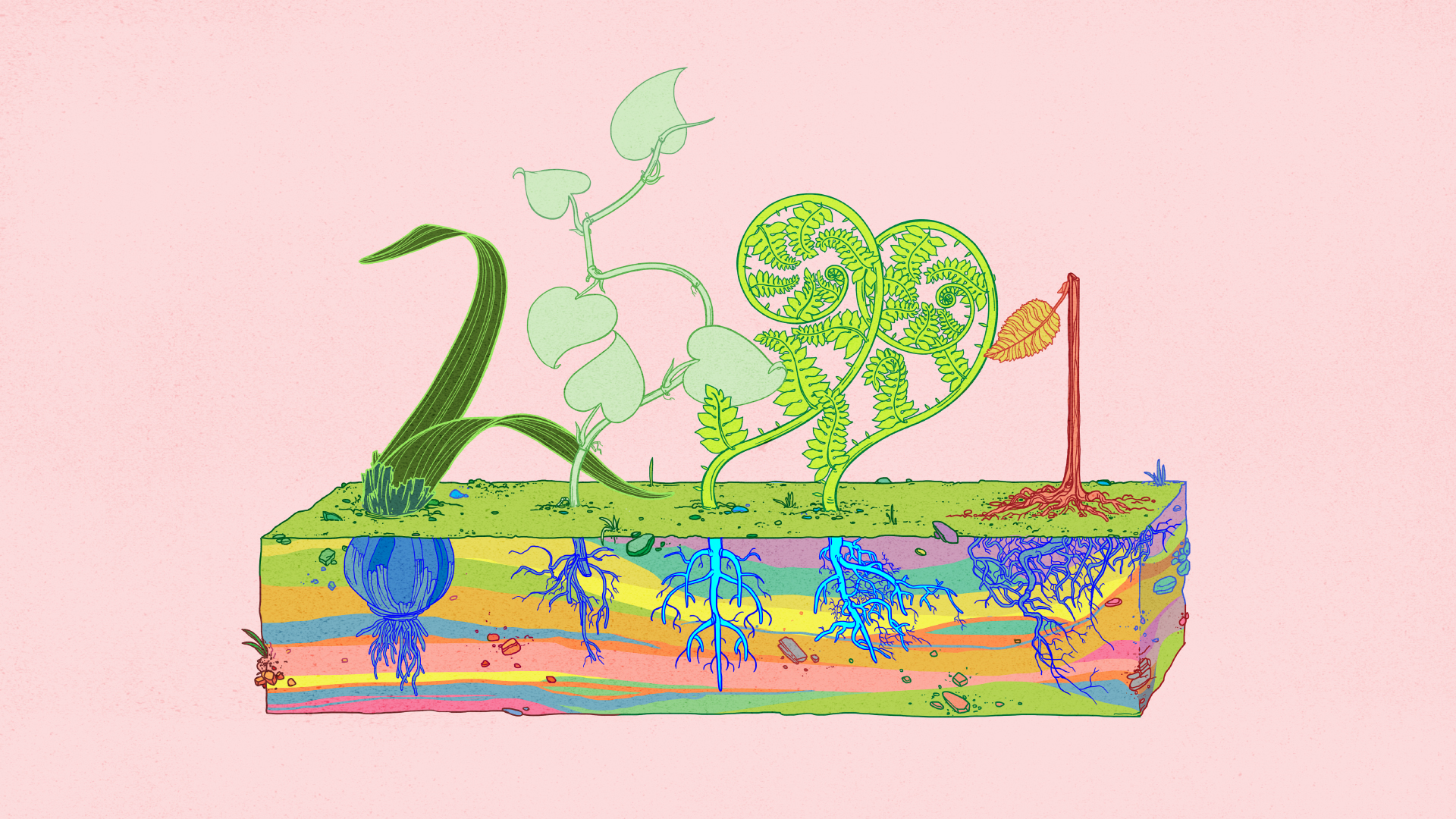 Colorful illustration of 5 plants with their roots exposed. Each plant forms the shape of a number,