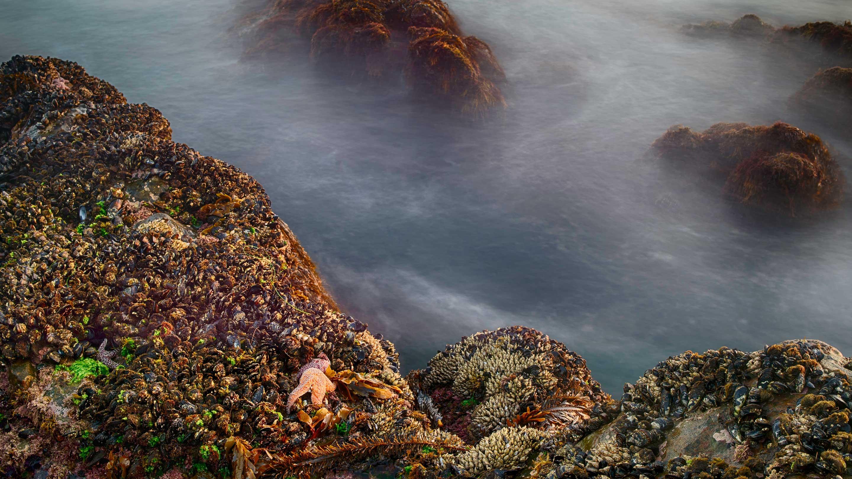 Tidal pool with ocean life