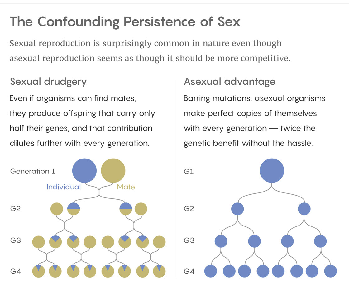 The Confound Persistence of Sex