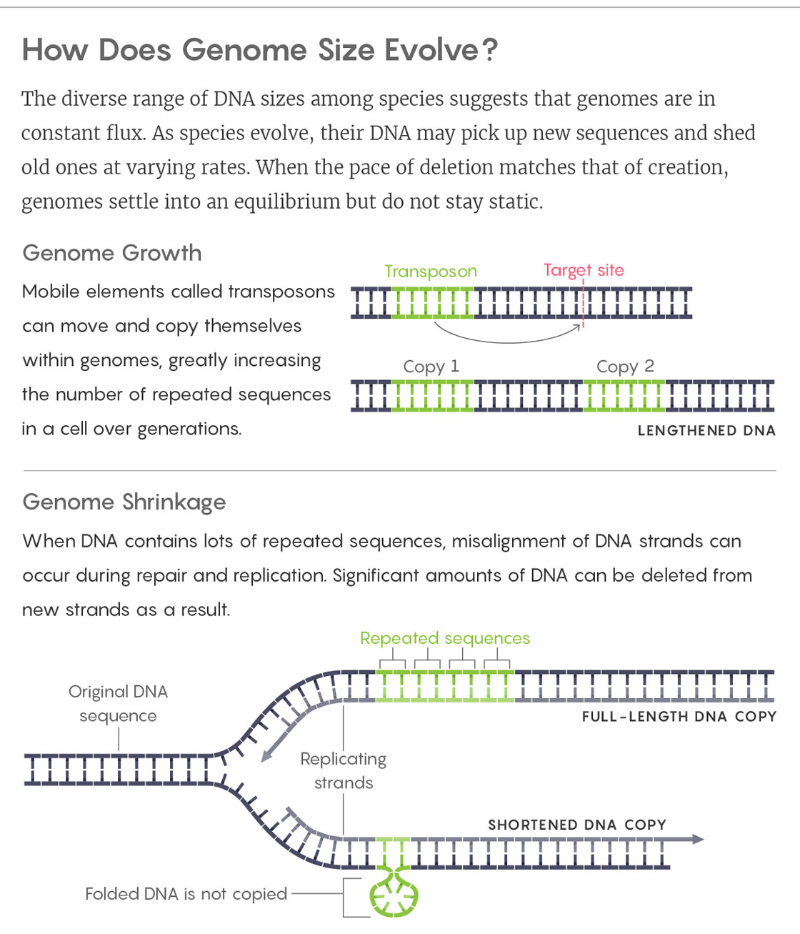 GRAPHIC: HOW DOES GENOME SIZE EVOLVE?