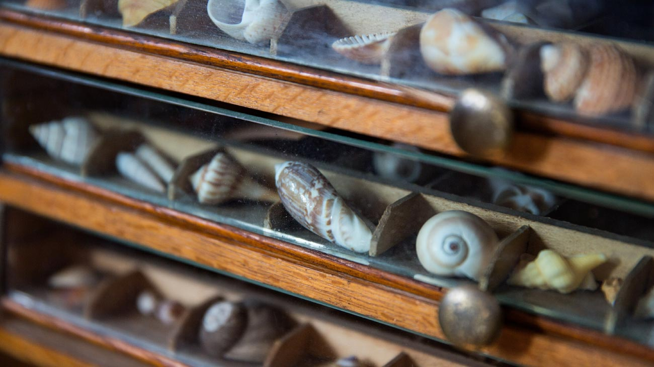 Shells in cabinet