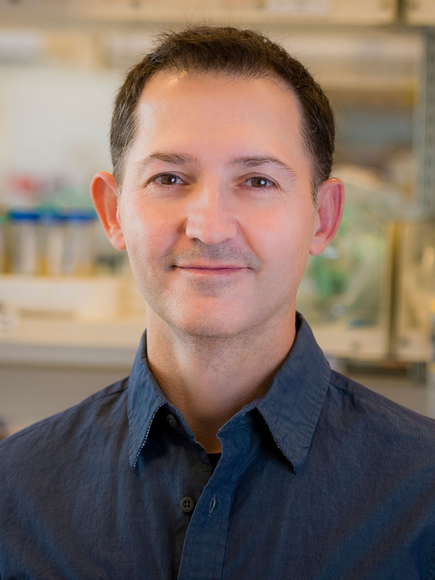 Gurol Süel, professor of molecular biology at the University of California, San Diego, studies how bacteria use electrical signals, analogous to the action potentials in nerve cells, to organize themselves within biofilms.