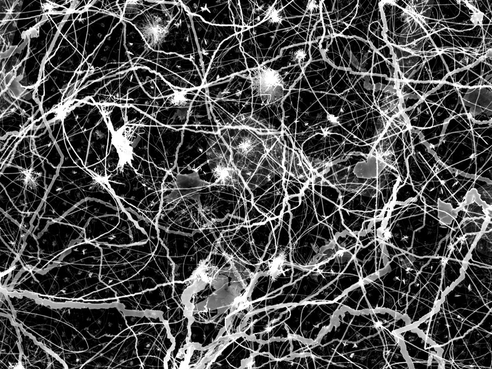 This network of highly interconnected nanowires may look chaotic and random, but its structure and behavior resemble those of neurons in the brain. Researchers at the California NanoSystems Institute are developing it as a brainlike device for learning and computation.