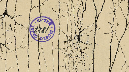 Every exquisite drawing by Santiago Ramón y Cajal, the founder of modern neuroscience, is marred by a curious mark. Here is the little-known story behind it.