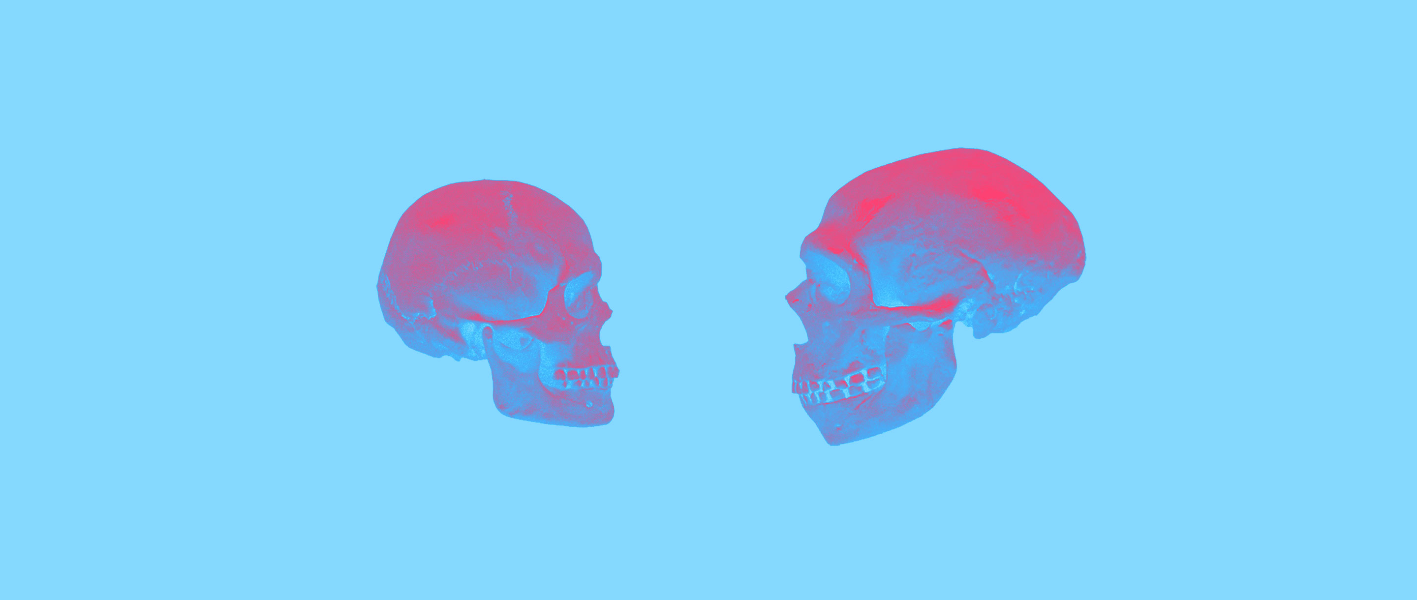 Modern humans (at left) and Neanderthals (right)