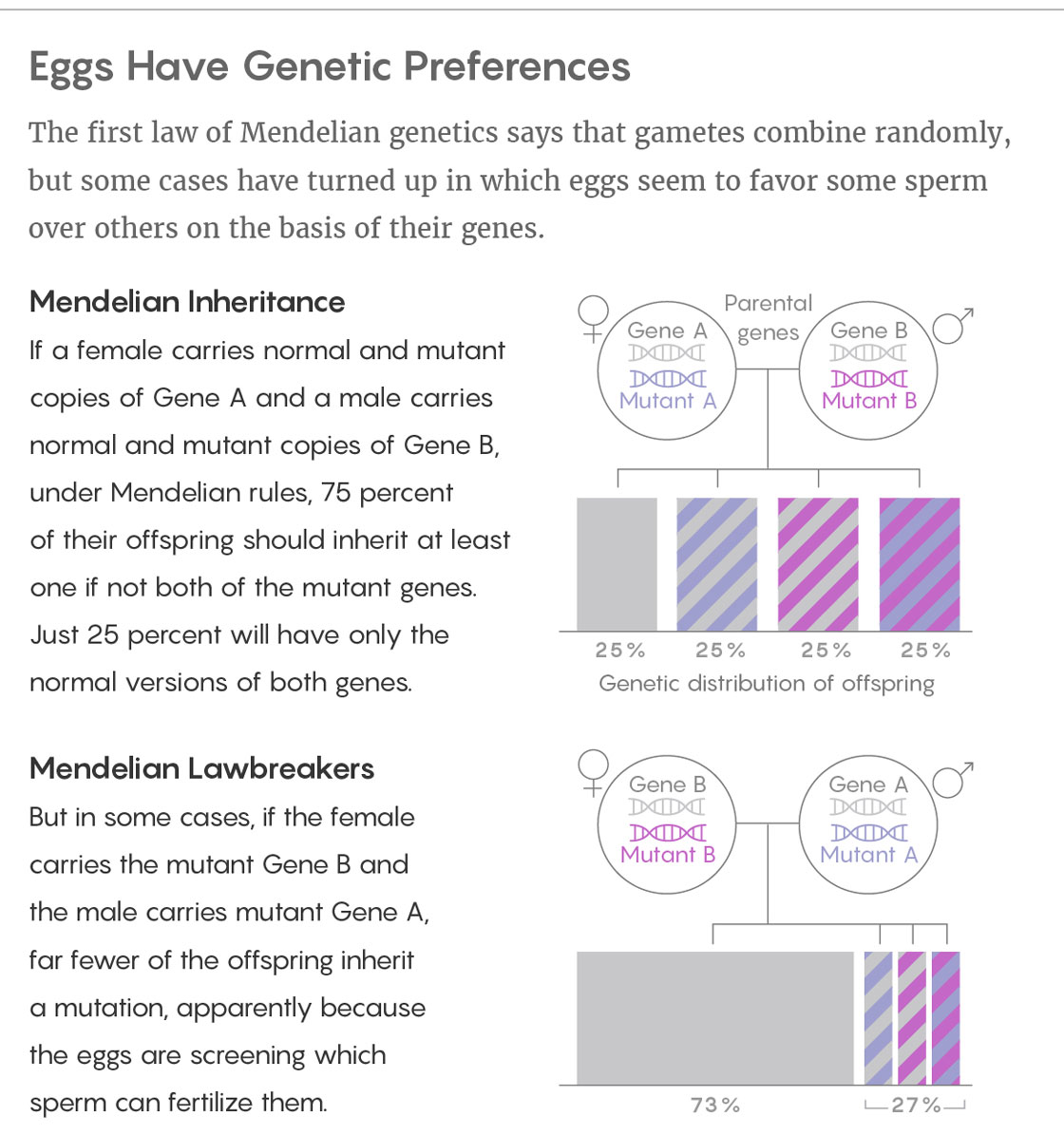 Eggs Have Genetic Preferences The first law of Mendelian genetics says that gametes combine randomly, but some cases have turned up in which eggs seem to favor some sperm over others on the basis of their genes. Mendelian Inheritance If a female carries normal and mutant copies of Gene A and a male carries normal and mutant copies of Gene B, under Mendelian rules, 75 percent of their offspring should inherit at least one if not both of the mutant genes. Just 25 percent will have only the normal versions of both genes. Mendelian Lawbreakers But in some cases, if the female carries the mutant Gene B and the male carries mutant Gene A, far fewer of the offspring inherit a mutation, apparently because the eggs are screening which sperm can fertilize them.