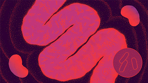 Kidneys sniff out signals from gut bacteria for cues to lower blood pressure after meals. Our understanding of how the symbiotic microbes affect health is becoming much more molecular.