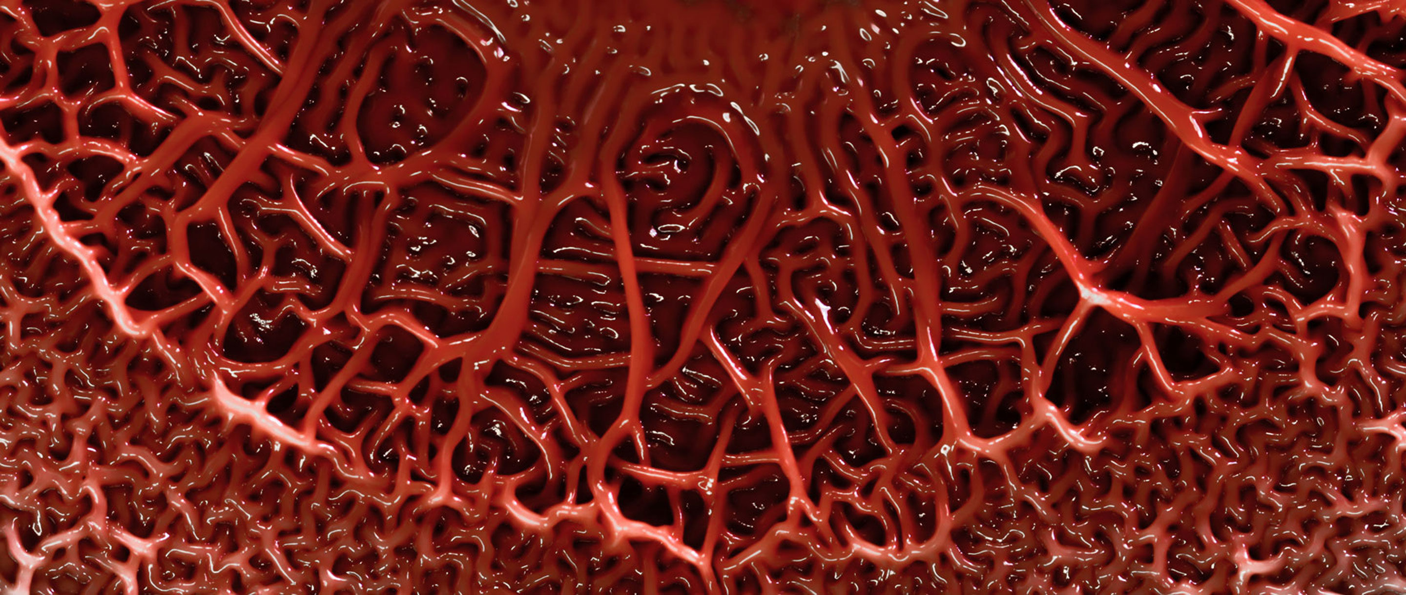 Red slime mold