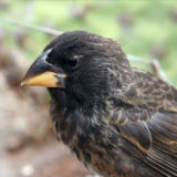The rapid, unorthodox emergence of a new finch in the Galápagos hints that speciation isn't rare. New hybrid species may quietly appear and disappear without anyone noticing.