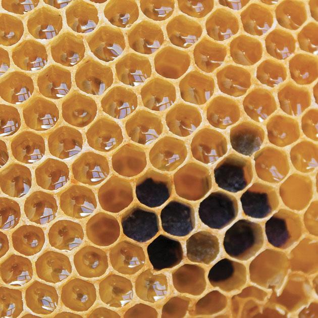 Hexagon tiling if honeycomb