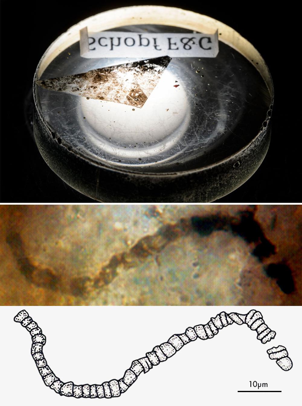 Щепка почти 3,5-миллиардного рока из месторождения Апекс-Черт в Западной Австралии (вверху). Пример одного из микрофоссилий, обнаруженных в образце породы из Apex Chert (внизу).