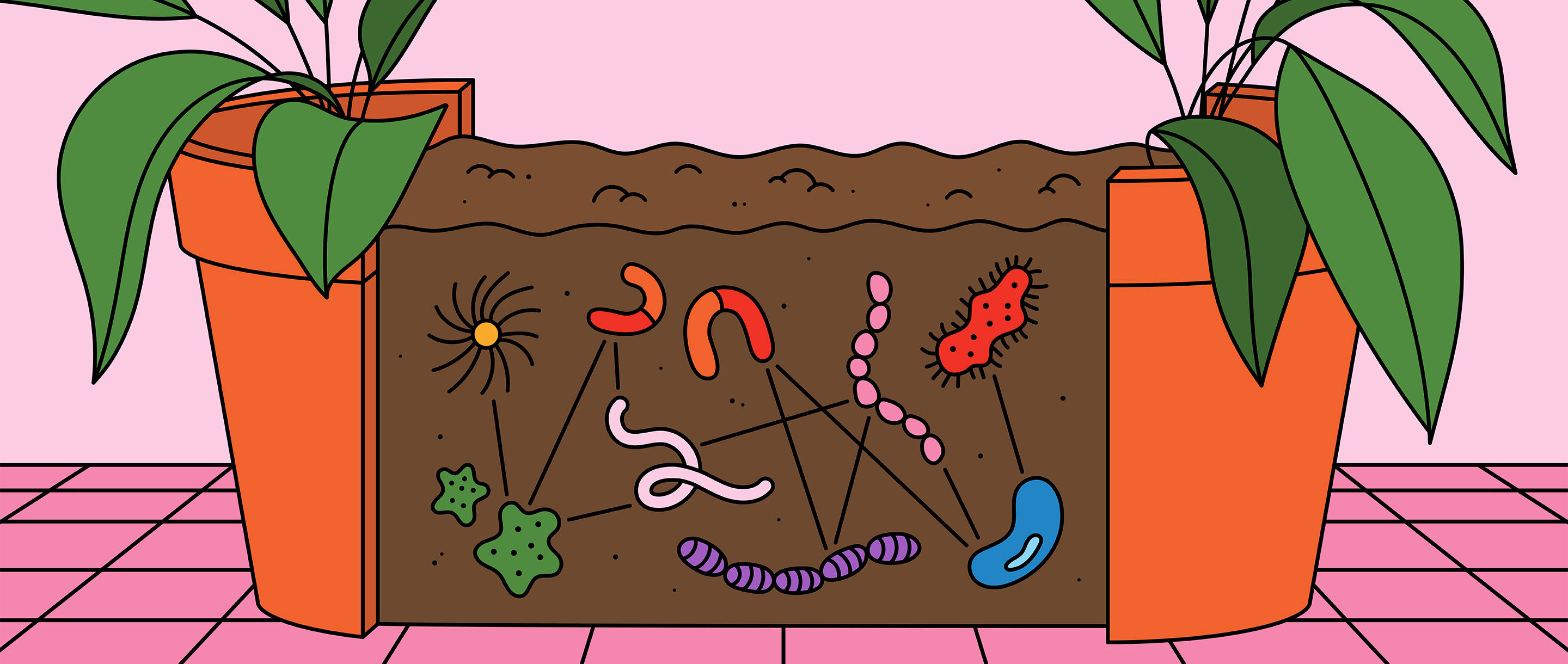 HP illustration of microbial networks
