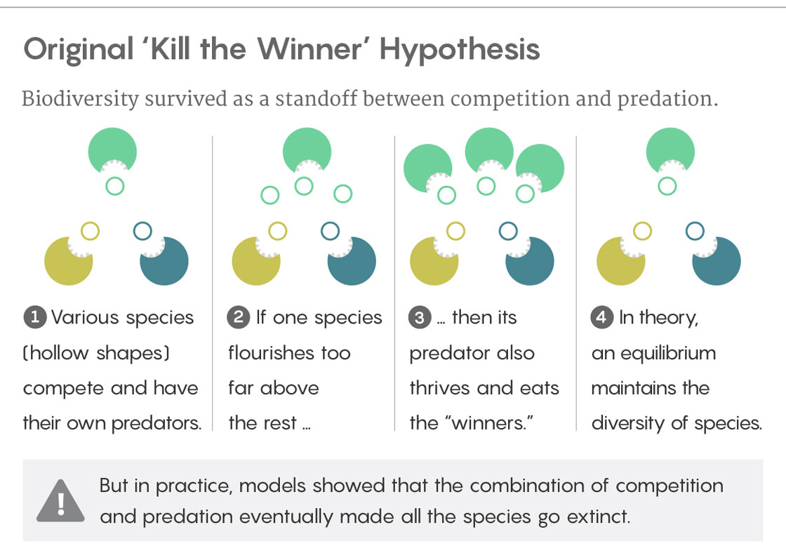 GRAPHIC: EXPLAINER OF ORIGINAL KILL THE WINNER