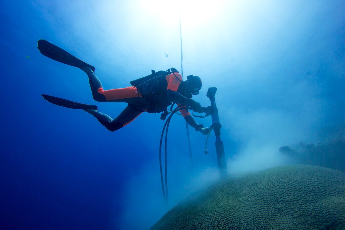 Photo of a diver drilling coral