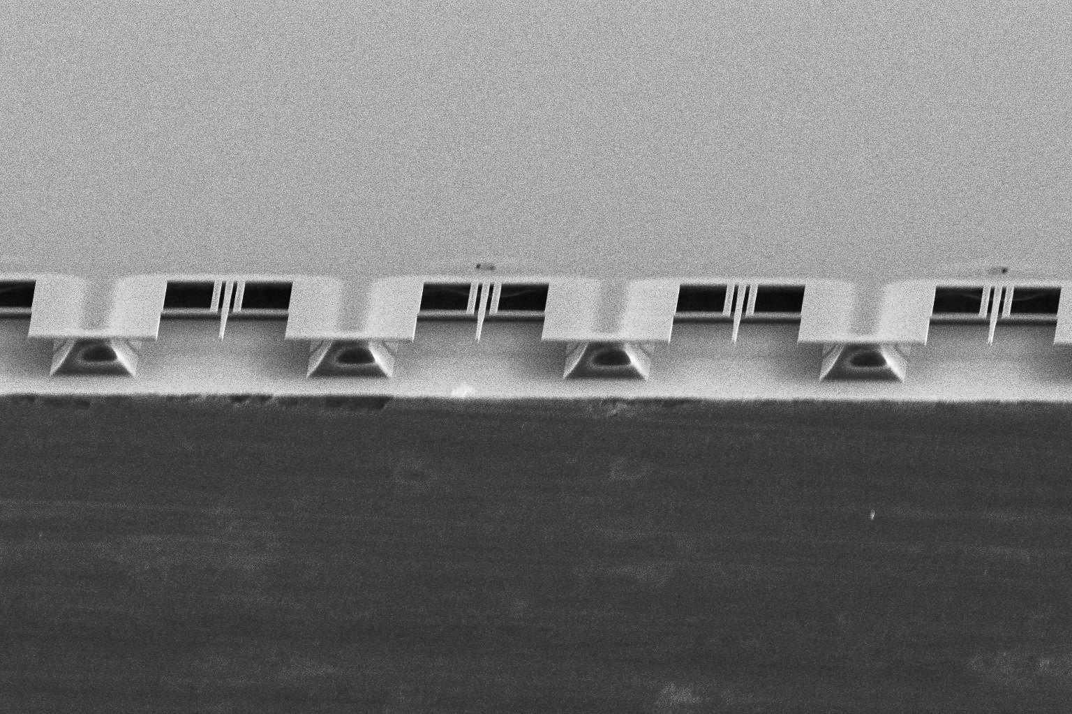 Microscopic image of 10-micrometer-long silicon beams