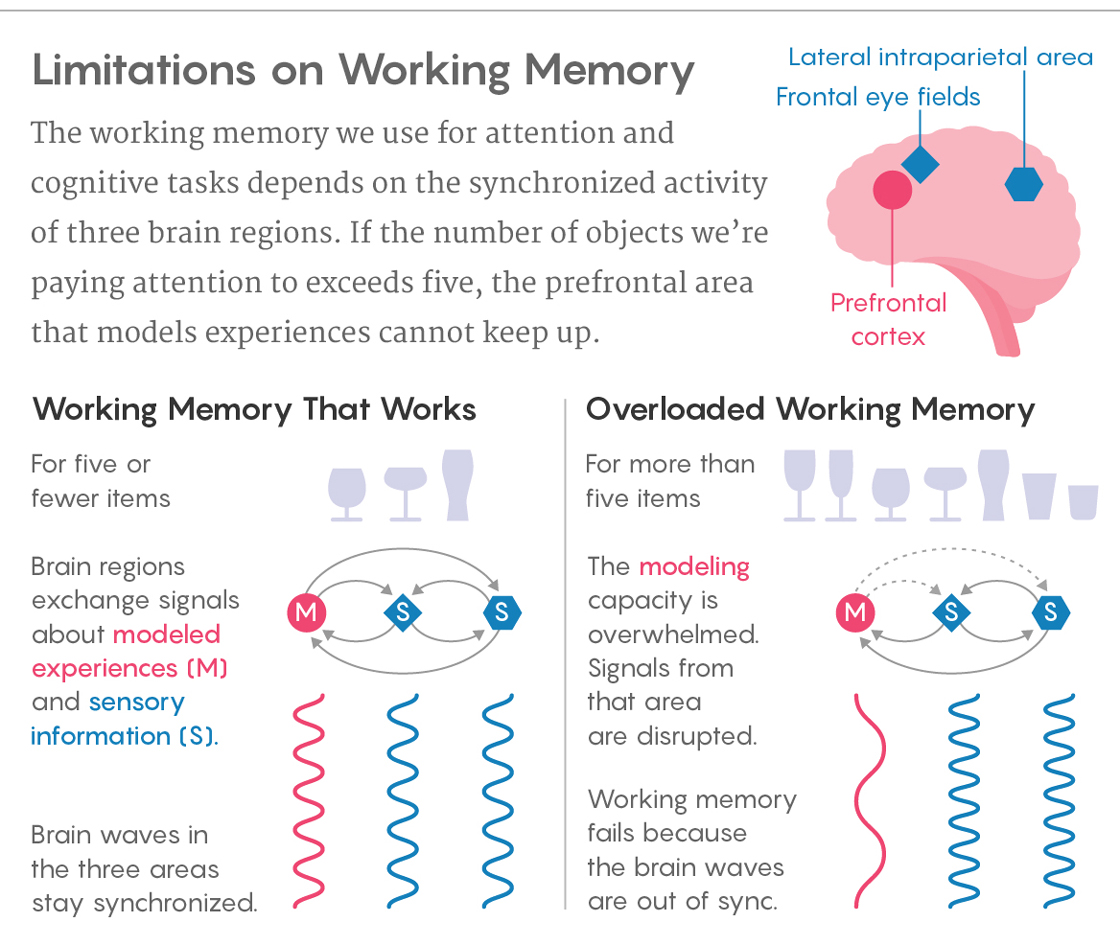 Overtaxed Working Memory Knocks The Brain Out Of Sync Quanta