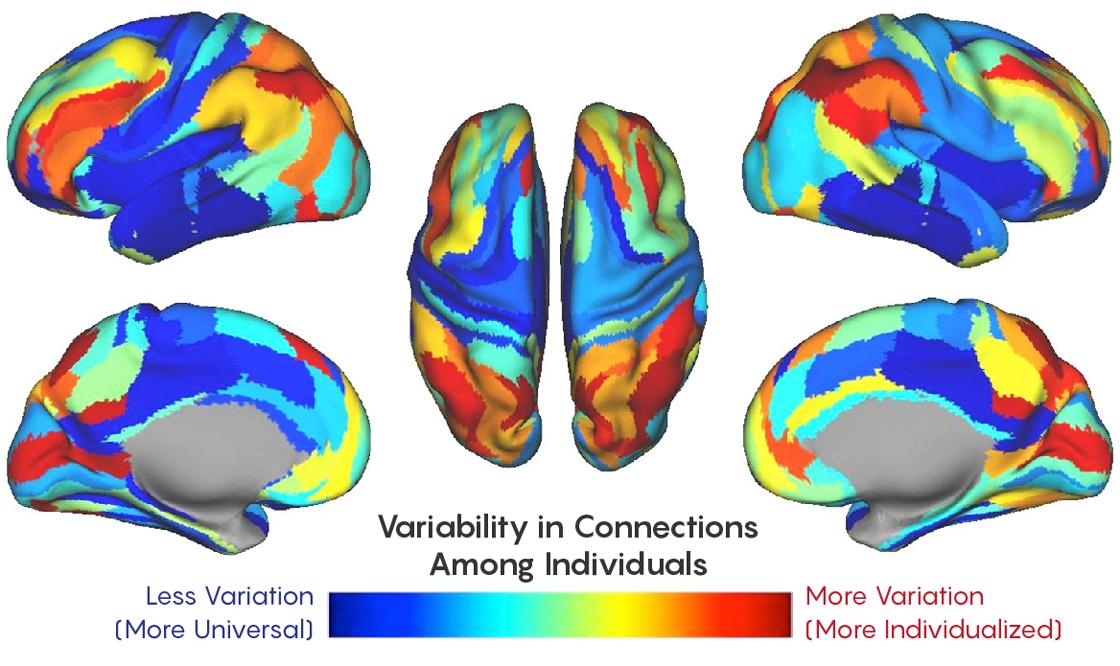 Distinctive Brain Pattern May Underlie >> Functional Fingerprint May Identify Brains Over A Lifetime Quanta