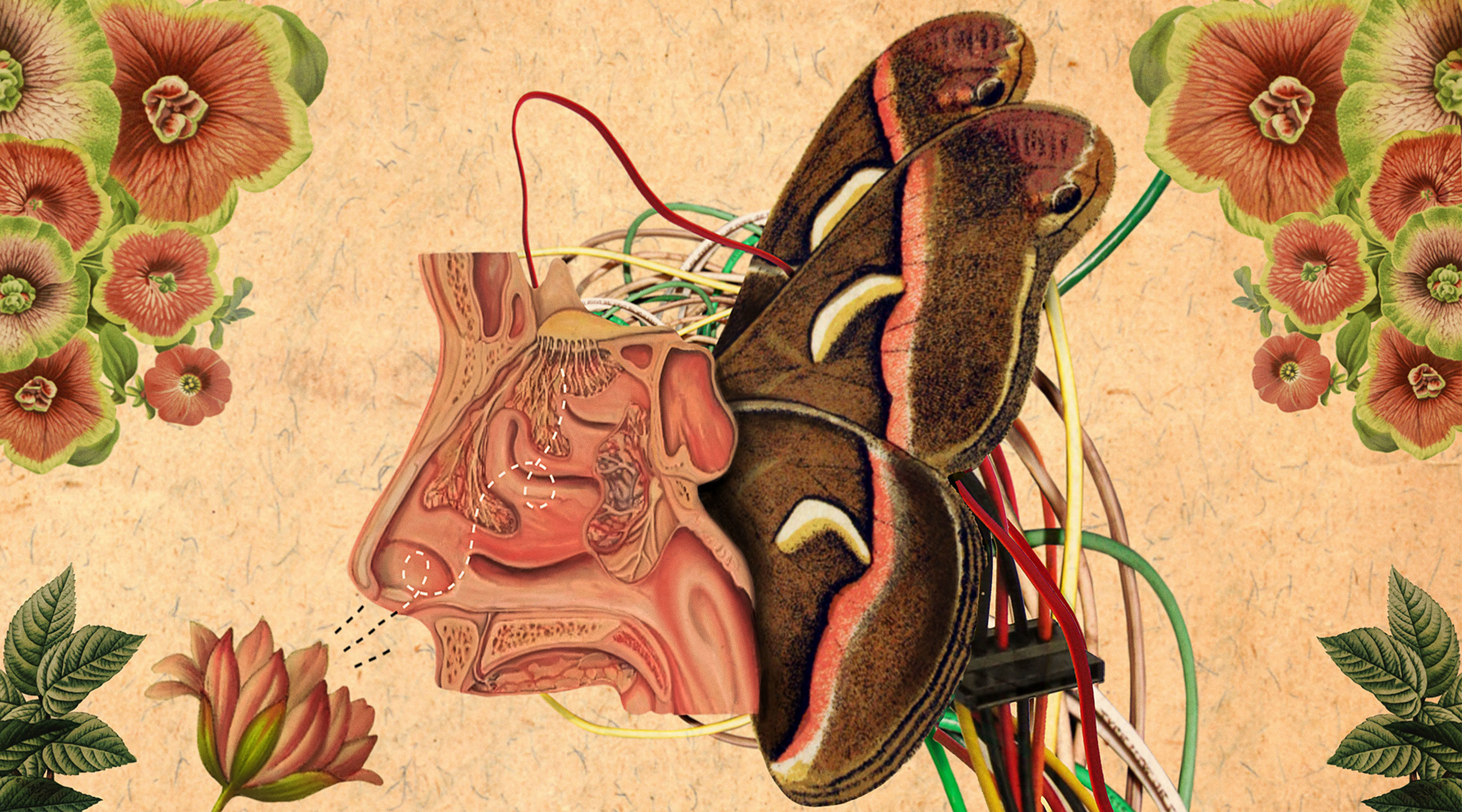 """Art for """"New AI Strategy Mimics How Brains Learn to Smell"""""""