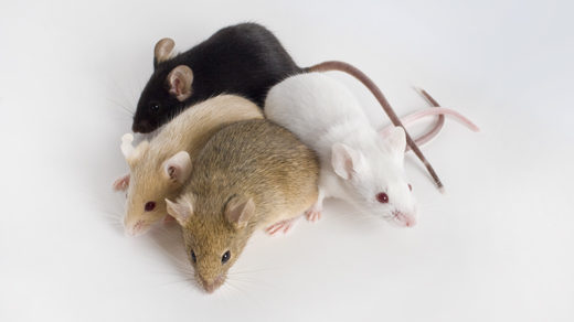 Photo of mice